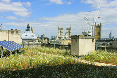 Popular green roofs